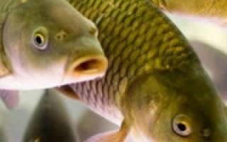Перевозка живой рыбы